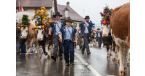 Alpine Festival with Alpine descent of the cattle