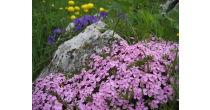 Chrütli-Tageswanderung: Alpenflora, über den Stallerberg nach Juf