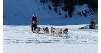 Small walks with the sled dogs