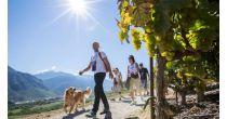 Walk through the vineyards Sierre - Salgesch