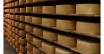 Visit of the cheese cellar