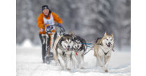 International sledge dog race called off