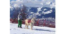 Ski Joëring pour les tous-petits