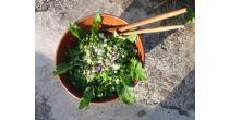 Cours de base: plantes sauvages comestibles