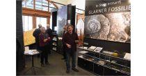 Fossilien-Einblicke mit dem Geologen