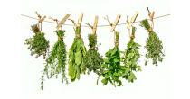 Plantes aromatiques & épices au Banneret Wisard