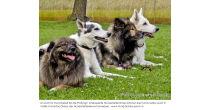 Hundehalterbrevet HHB Prüfung