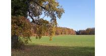 Spaziergänge im Naturschutzgebiet Wildenstein