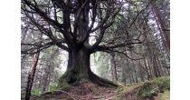 Die Mythologie des Waldes