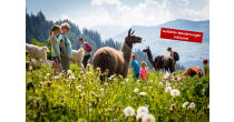 2. Wanderfestival Brigels