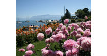 The Lakeside Dahlia exhibition