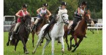 Course populaire de chevaux