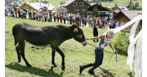 Donkey Festival in Malbun