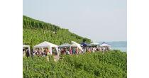 La route du vin à Douanne