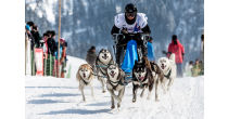 Intern. Dog-Sledding Race in Gadmen