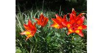 Botanische Rigi-Wanderungen