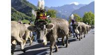 22. Glarner Alpchäs- und Schabziger Märt