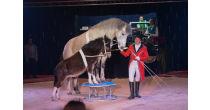 Circus Harlekin in Sörenberg