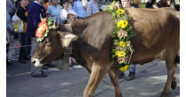 Alpine Procession, Cattle Show and Autumn Market