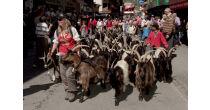 La promenade des chèvres