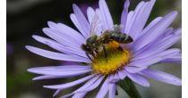 Présentation des ruches du Jardin alpin