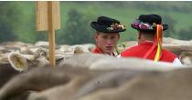 Viehschau in Speicher