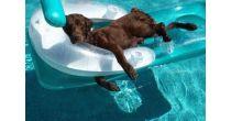 SKG Bremgarten   Hunde Spass Triathlon in und um die Badi