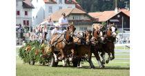 Marché-Concours national de chevaux