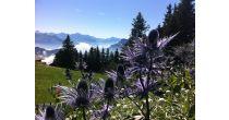 Märchenhafter Rigi-Wildkräuterspaziergang