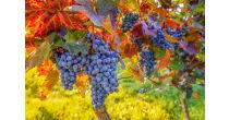 Tag der offenen Weinkeller Deutschschweiz