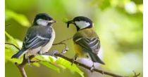 Di dils utschals - Tag der Vögel