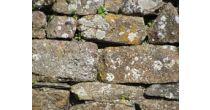 Balade-conférence : Les murs de pierres sèches