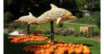 Maritime Pumpkin Exhibition