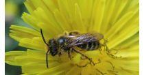 Le vaste monde des abeilles
