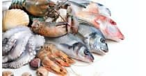 Brunch du pêcheur au Rocheray
