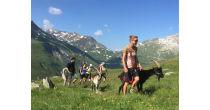 Hiking Sundays with Pack-goats