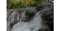 Erlebnis Wasser - GEO-Tag der Artenvielfalt