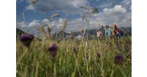 Bodenbrüter-Exkursion - GEO-Tag der Artenvielfalt