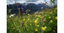 Schlussveranstaltung des GEO-Tages der Artenvielfalt