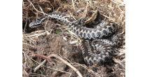 Reptilien-Exkursion - GEO-Tag der Artenvielfalt