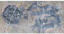 Dinosaures et poissons fossiles dans les Alpes