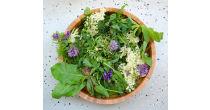 Essbare Wildpflanzen sammeln & kochen