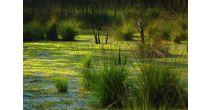 Faszination Moor (Exkursion)