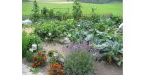 Besuch im Bauerngarten