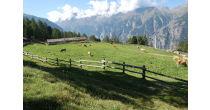 Alpen-Erlebis