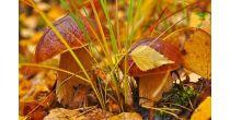 Das geheimnisvolle Leben der Pilze (Exkursion)