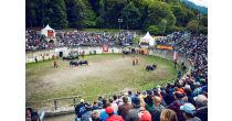 Cow fights Foire du Valais