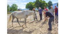 Journée de formation : Face à face révélateur avec le cheval