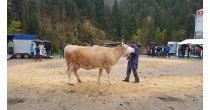 Viehschau Horboden