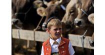 Grösste Viehschau der Ostschweiz